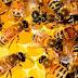 Mortandade de abelhas é tema de evento da FMVZ USP em Pirassununga
