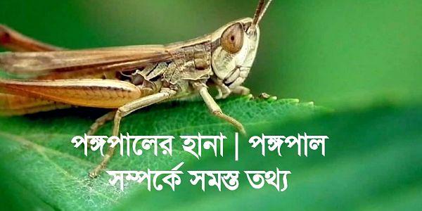 পঙ্গপালের হালা | পঙ্গপালের আক্রমণে চাষের ক্ষতি | Locust Swarm | পঙ্গপাল নিয়ে সমস্ত তথ্য জেনে নিন