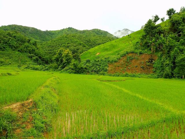 laos arroz
