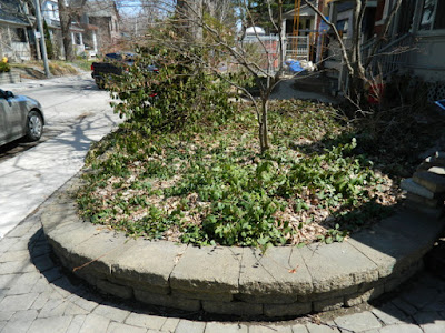 Riverdale Spring Cleanup Front Yard Before by Paul Jung Gardening Services--a Toronto Organic Gardening Company