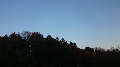 日没直後の谷津の林