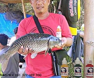 Essen Ikan Mas Subang Babon Galatama