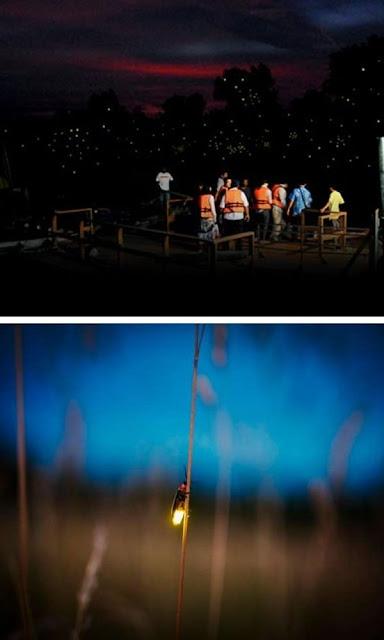 Kuala Selangor Fireflies sesi lawatan
