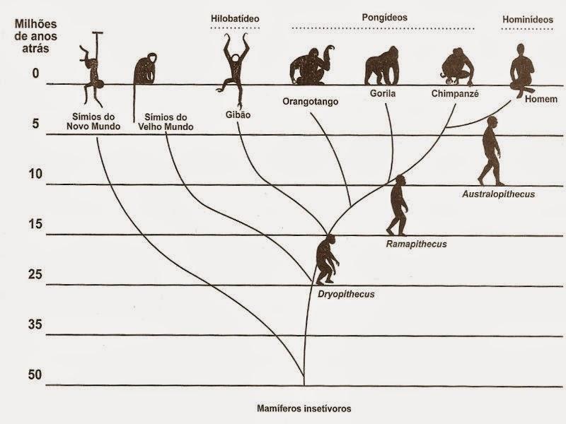 Árvores filogenéticas - Taxonomia e Sistemática