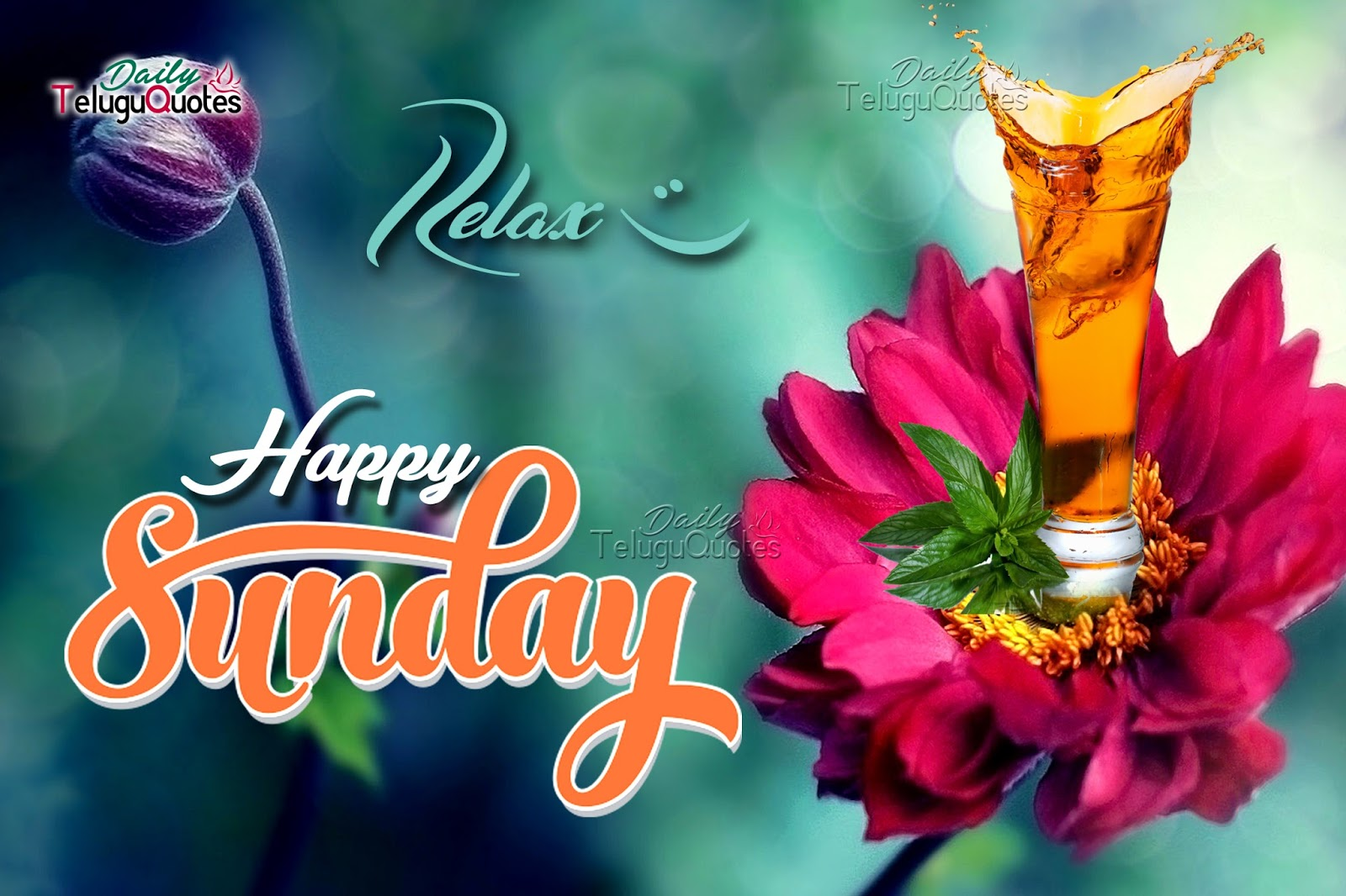 Have A Happy Sunday Pictures Photos Images Wallpapers