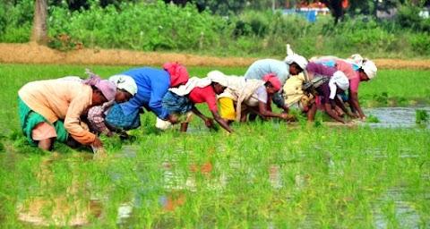 छत्तीसगढ़ में कृषि व्यवस्था