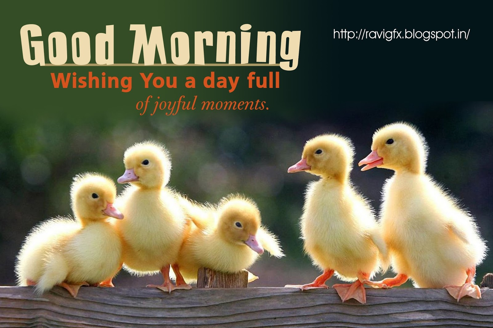 Funny Good Morning Sayings Greetings Hd Wallpapers Free Online