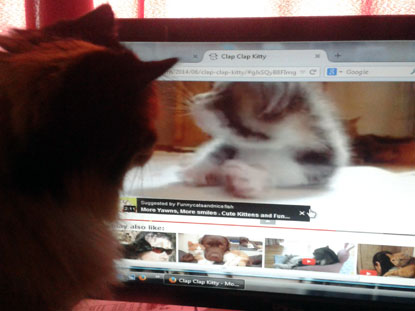 Tortie Bonnie enjoys watching online cat videos