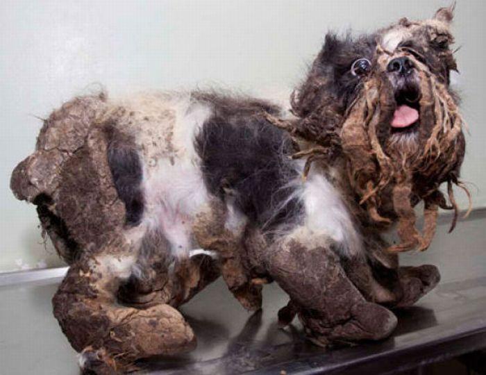 Pensaron que era un perrito sucio pero cuando lo bañaron resultó ser un morro de la Emiliano.