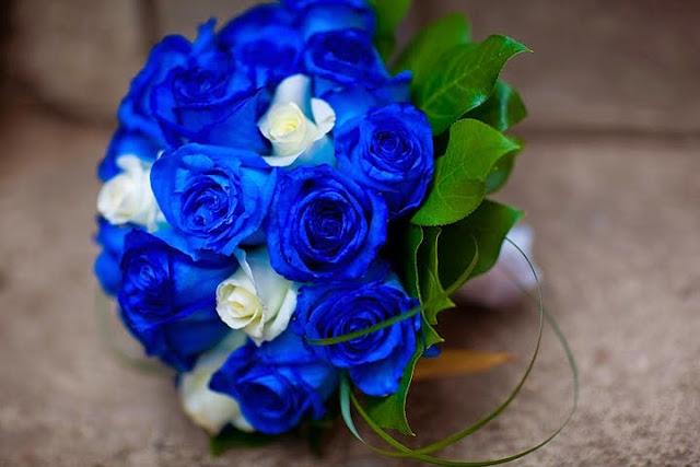 hoa hồng xanh đẹp nhất 2017 4