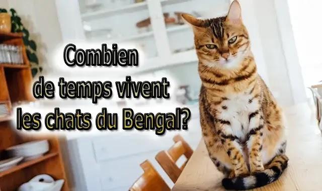 Combien de temps vivent les chats du Bengal
