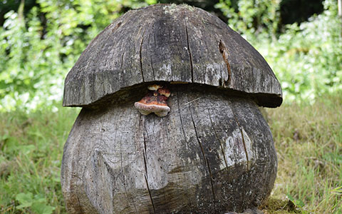 Large shapes carved out of tree stumps