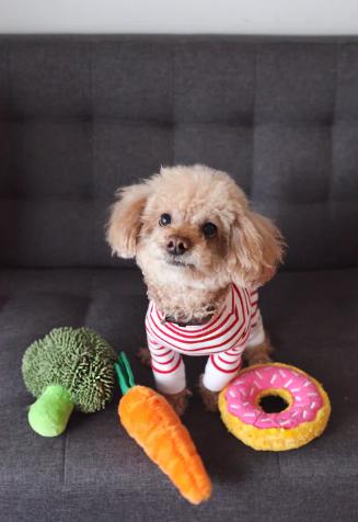 7 Secrets To Choosing A Safe, Healthy Pet Food