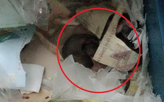 Góc thất thu: Cả cửa hàng lục đục vì liên tục mất tiền, cuối cùng phát hiện ra do chuột tha hết về lót ổ