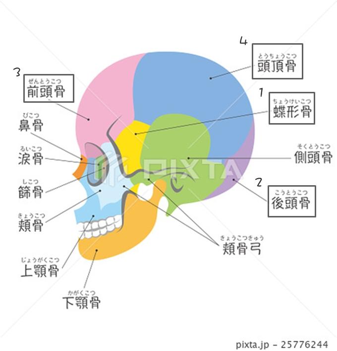 日本筋膜小顏整骨
