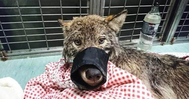Эстонские строители спасли из реки замёрзшую собаку и отвезли в клинику