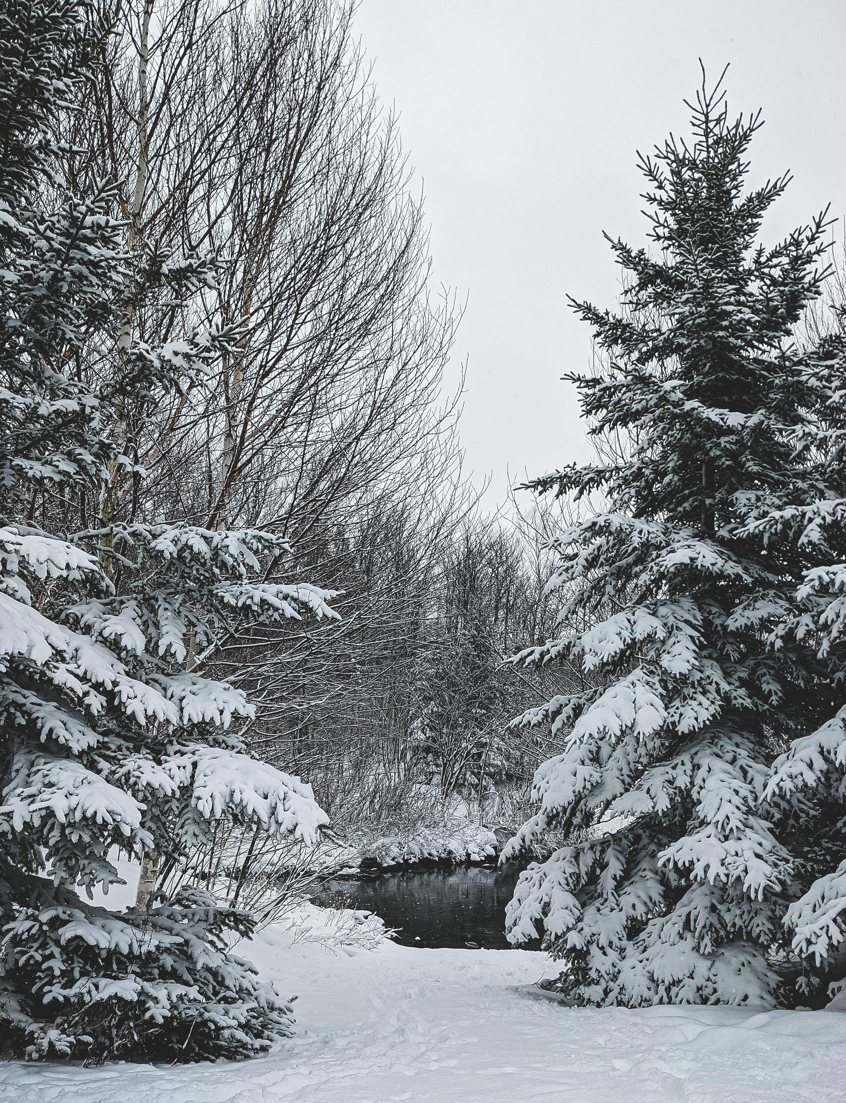 Winter Scene | Photo by Sigmund via Unsplash
