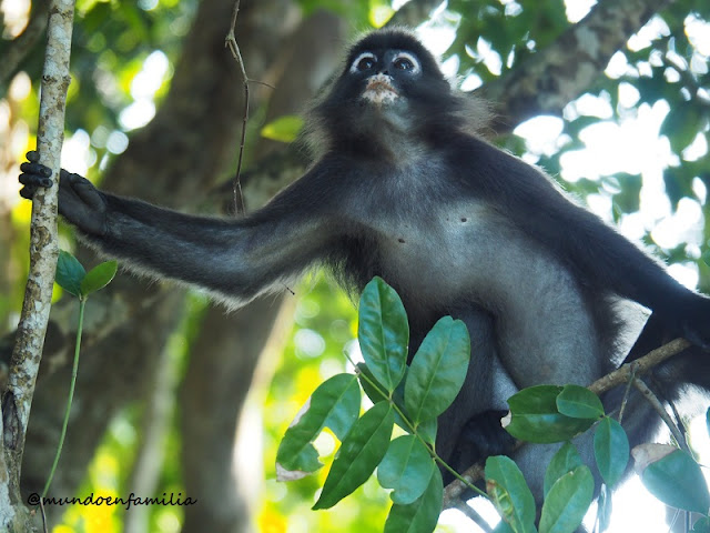 Fauna local de las Islas Perhentian