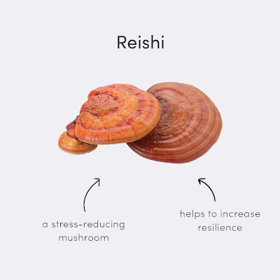 Reishi mushroom growing temperature