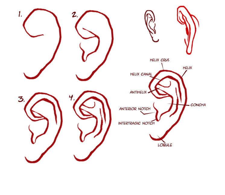 It's just a graphic of Simplicity Drawing Anime Ears
