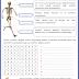 4. Sınıf Fen Ve Teknoloji Kemikler - Eklemler - Kaslar Etkinliğim