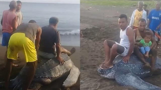 Θαλάσσια χελώνα βγήκε στην αμμουδιά για να γεννήσει κι οι ντόπιοι άρχισαν να την καβαλάνε και να την ποδοπατούν (pics & vid)