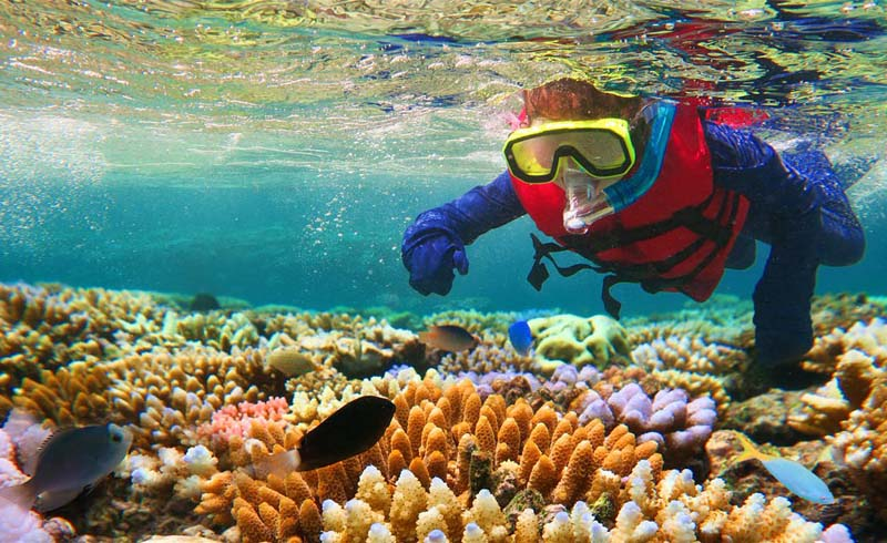 Wildlife and nature, Ecotourism, Diving and snorkelling