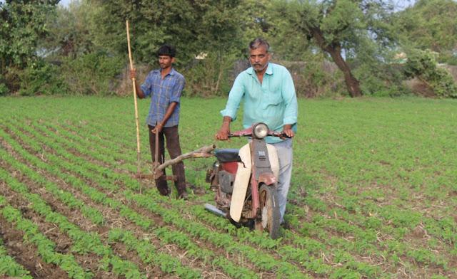 किसान ने फसल को बनाया खजाना, खरपतवार हटाने के लिए अपनाया आधुनिक तरीका...