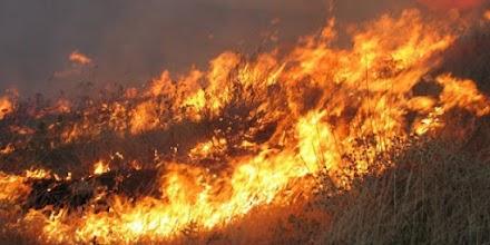 Έκτακτο : Μεγάλη φωτιά στην Σταμάτα Αττικής