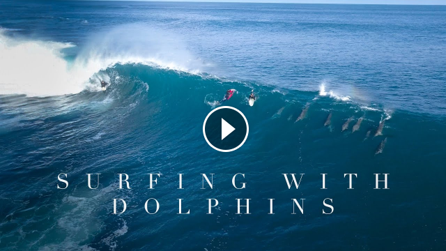 Surfing with Dolphins - Western Australia