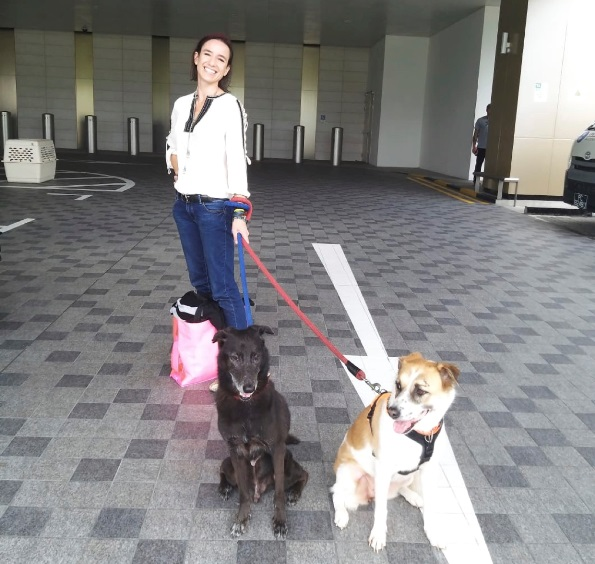 Anne and her dogs