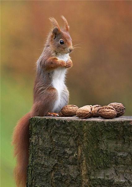 Funny Animal Eating