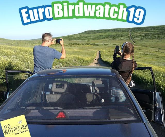 Европейский учет птиц EuroBirdwatch 2019