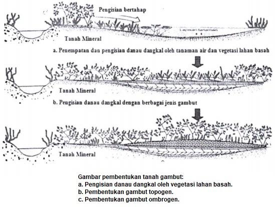 Pembentukan lahan gambut