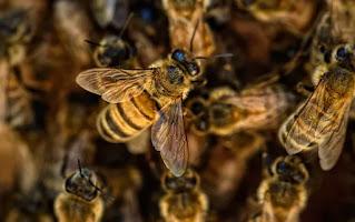 arılar ne kadar dayanır