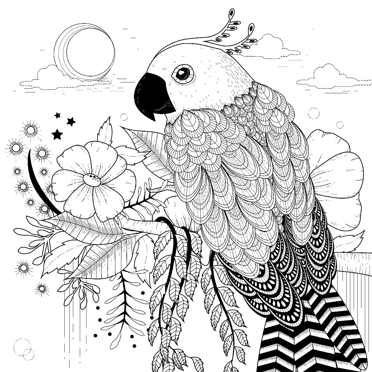 Free Mandala : Papagei Malvorlagen Mandala