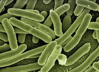 Cara Bakteri Bisa Kebal terhadap Antibiotik atau Obat Tertentu