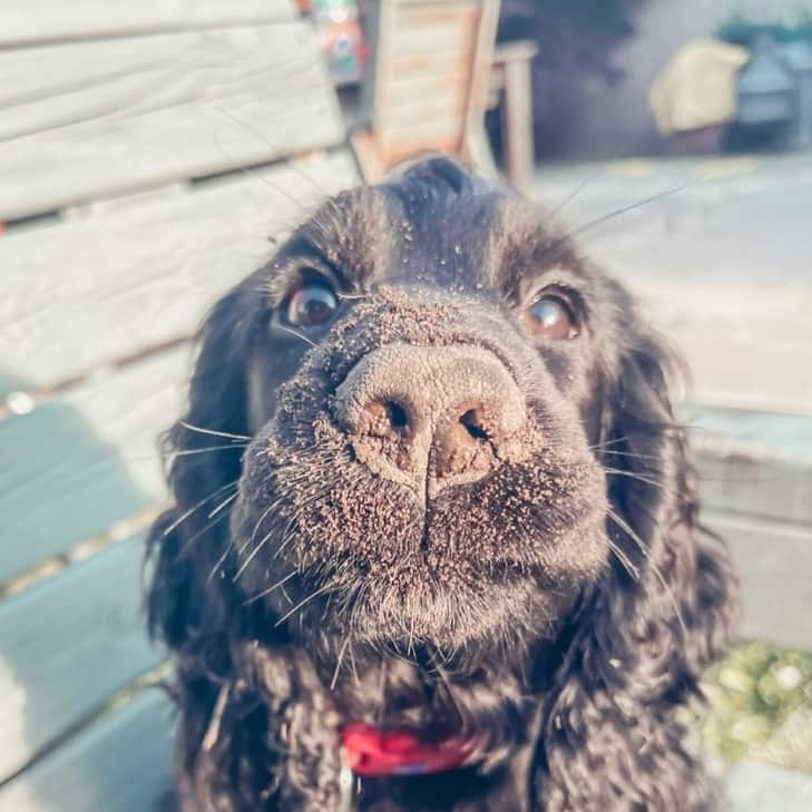 15 Things That Dogs Love