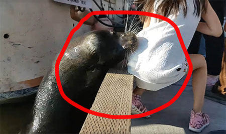 Canada : Sea Lion yanks a Kid into sea, Man saves bravely – Video goes viral in SM