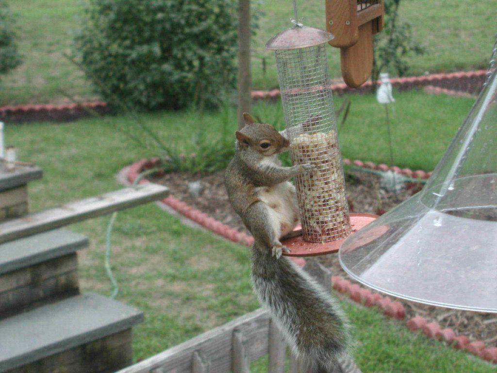 The 10 Best Squirrel-Proof Bird Feeders : Reviews and Buying Guide(2020)