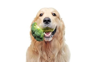 can dogs eat broccoli, can dogs have broccoli