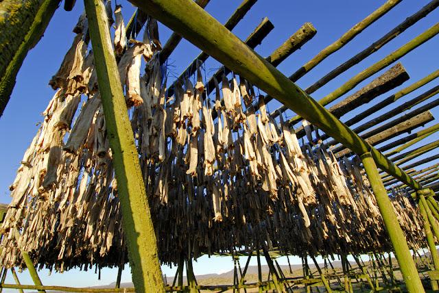 Icelandic dried fish process