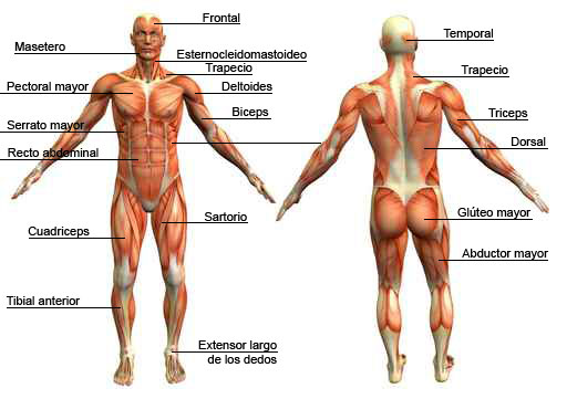 double switch leg wiring diagram sistema muscular upper leg bone diagram labeled #15