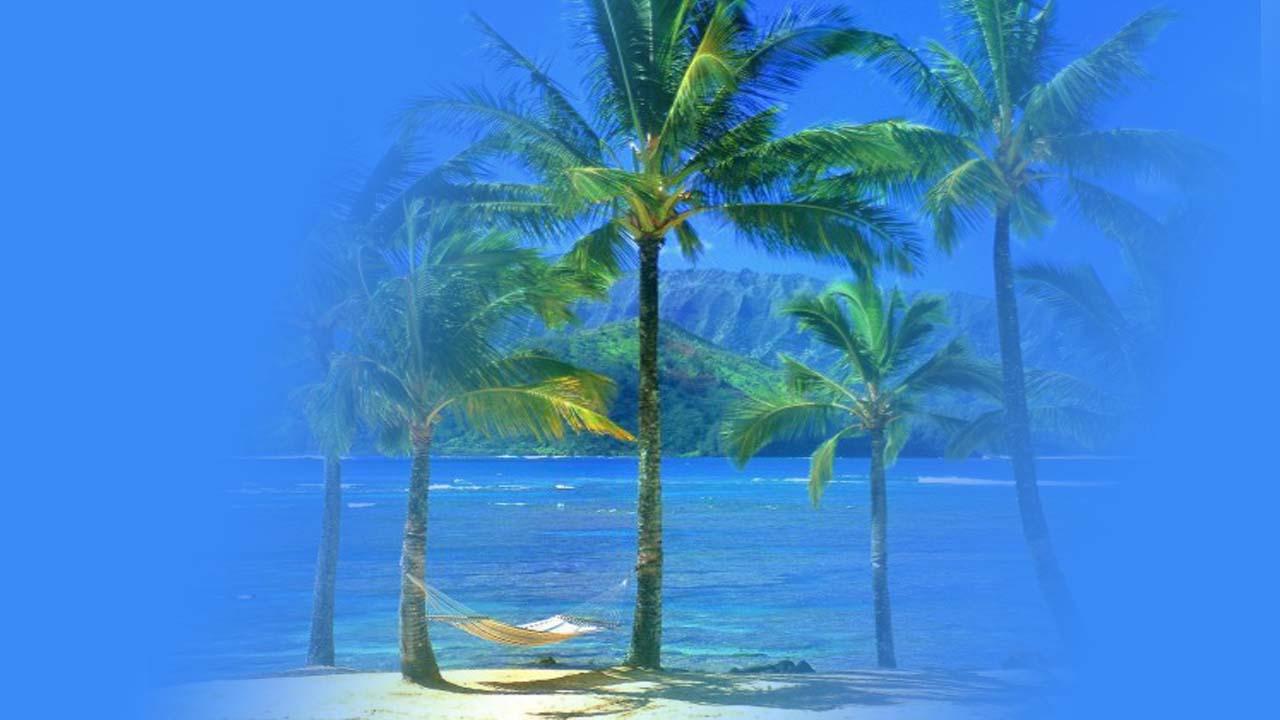 pohon kelapa banyak manfaatnya