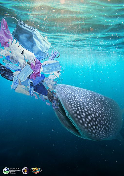 whale shark eating face mask and medical waste
