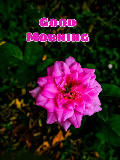 good morning flowers photo