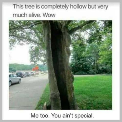 hollow tree meme funny