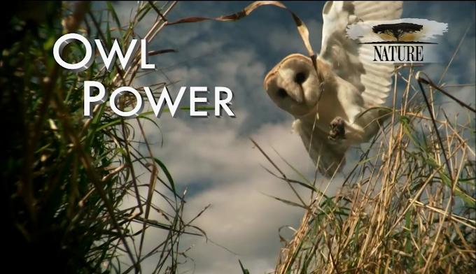 Nature: Owl Power (2015)