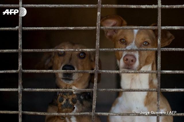 Nhóm người Việt Nam bị tù giam, phạt hơn 770 triệu đồng vì ăn thịt chó