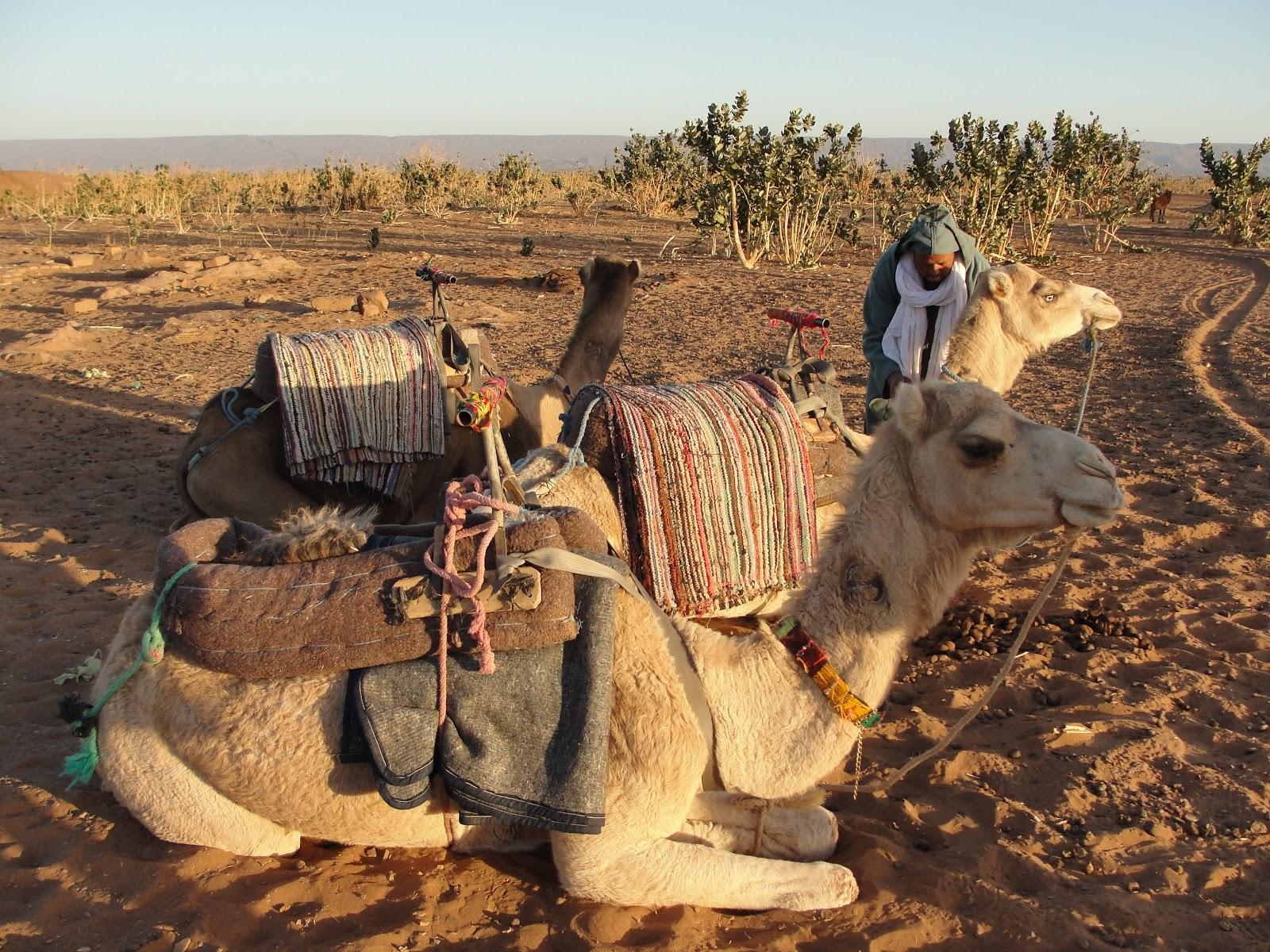 Resultado de imagem para marrakesh